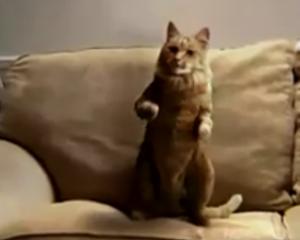 Le chat danse